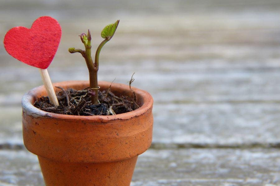 Plante en pôt
